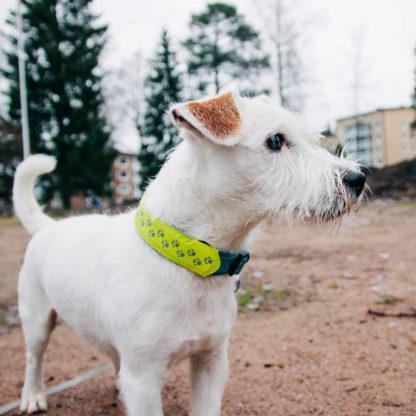 Lumus LED-list som settes over hundens halsbånd